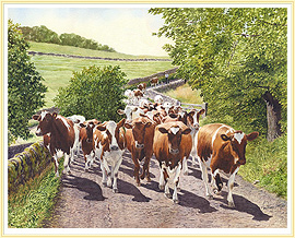 Heading Home - a classic Cow Picture - click for details