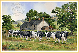 Leading Ladies - a classic Farming Picture - click for details