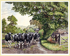 Cattle crossing - a classic Farming Picture - click for details