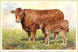 limousin - a classic Farming Picture - click for details