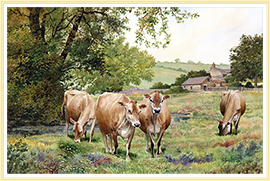 our latest jersey cattle picture - click for details